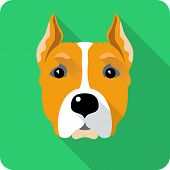picture of american staffordshire terrier  - dog American Staffordshire Terrier icon flat design - JPG