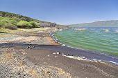 foto of green algae  - Lake Bogoria shore in Kenya the water is green from algae - JPG