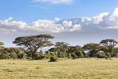stock photo of kilimanjaro  - Kilimanjaro with snow cap seen from Amboseli National Park in Kenya - JPG