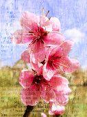 Floración de primavera de un durazno