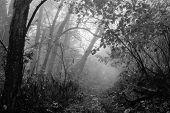 Foggy forest trail in Autumn - Shenandoah National Park - Virginia