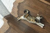 Cat Is Lying On the Warm Floor