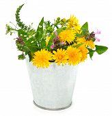Beautiful Wildflowers, Chamomiles, Milfoil