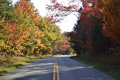 Colorful Road in the Fall