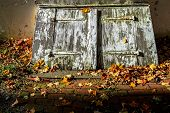 Cellar Door And Leaves