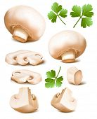 foto of agaricus  - Collection of mushrooms with parsley - JPG