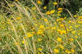 pic of spike  - Natural background of Yellow flowers and spikes in spring time - JPG