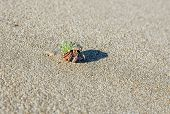 stock photo of hermit crab  - hermit crab on the beach on sand background - JPG