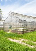 picture of hydroponics  - Small light greenhouse for organic hydroponic farm - JPG
