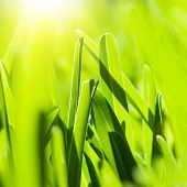pic of lawn grass  - Picture of fresh green grass background - JPG