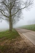 picture of row trees  - Country road in a rural landscape with a row of bare trees - JPG