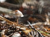 picture of toadstools  - Small toadstools mushrooms growing in autumnal forest - JPG