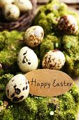 foto of grass bird  - Bird eggs  with tag on green grass background - JPG