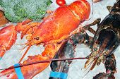 pic of lobster tail  - Frozen lobster on ice for sale at the market - JPG