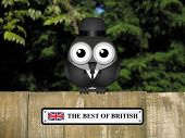 picture of bird fence  - Comical British gentleman bird with The best Of British sign perched on a timber garden fence against a foliage background - JPG