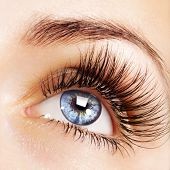 stock photo of eyebrow  - Woman blue eye with extremely long eyelashes - JPG