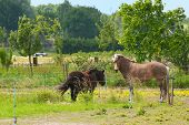 Horse and pony together in farmland