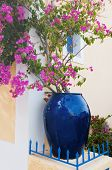 Bougainvillaea in blue pot at Greek Assos