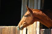 foto of farm animals  - A beautiful brown horse head profile portrait with an alert expression in the face and watching other horses out of the stable on a farm - JPG