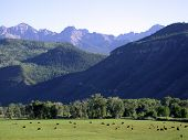 Uncompahgre Valley 1