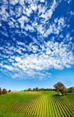 Amazing vineyard in South Australia