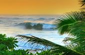 Waves and palm trees at sunset