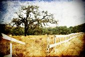 Grungy old oak tree and fence photo