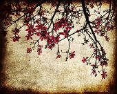 image of cherry-blossom  - Grungy image of cherry blossoms - JPG