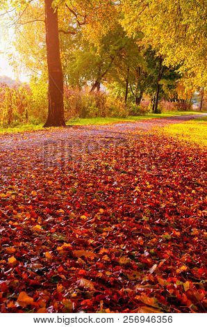 poster of Autumn trees along the park alley in sunny weather. Autumn sunset landscape. Autumn park alley covered with fallen autumn leaves in sunny autumn evening