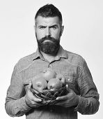 Man With Beard Holds Wicker Bowl With Fruit Isolated On White Background. Farmer With Serious Face H poster