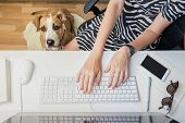 Going To Work With Pets Concept: Woman Working At Desktop Computer With Dog Sitting Next To Her. Top poster