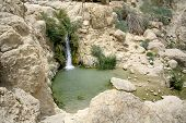 desert oasis in the dead sea region