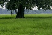 Old Oak Tree On Meadows. A Field On Which Grows One Beautiful Tall Oak Tree, A Summer Landscape In S poster