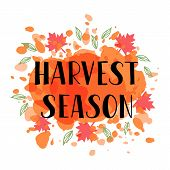 Harvest Season - Hand Drawn Lettering Phrase And Autumn Harvest Symbols. Greeting Card With Autumn L poster