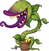image of carnivorous plants  - Cartoon carnivorous plant - JPG