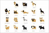 Collection Of Different Dogs Breeds Characters And Lettering Breed In English Vector Illustrations poster