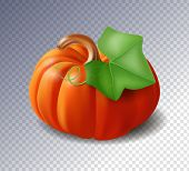 Ripe Orange Pumpkin With A Leaf  Isolated On Transparent Background, Symbol And Sign, Holiday. Hallo poster