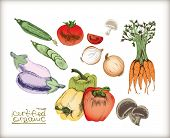Organic vegetables set. Very detailed hand drawn.