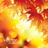 Vector autumn leaves background.