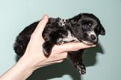 Very Cute Black Puppies. Beautiful Puppies. Little Puppies. poster