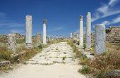 Salamis Archaeological Site Cyprus