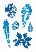 Set Of Vector Leaf Imprints. Collection Of Blue Leaves Imprints On Transparent Background. Grunge Le poster