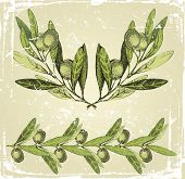 stock photo of olive branch  - hand drawn olive branches ornament - JPG