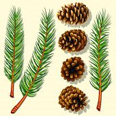 Pine Tree Branches and Cones. Vector Illustration