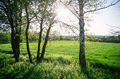 Spring Evening Landscape On The Field In The Rays Of The Evening Sun. poster
