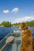 Dog In Canoe