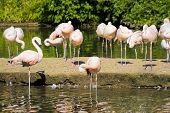 Aves Flamingos
