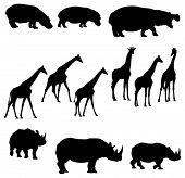 Hippo Giraffe Rhino