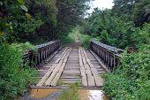 Timber Bridge In Papua New Guinea
