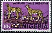 NIGERIA - CIRCA 1973: Postage stamp printed in Nigeria shows cheetah in the Yankari National Park